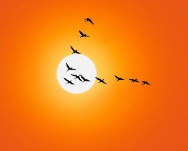 Birds V Formation