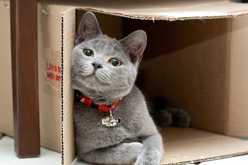 why do cats like to stay inside boxes science abc. Black Bedroom Furniture Sets. Home Design Ideas