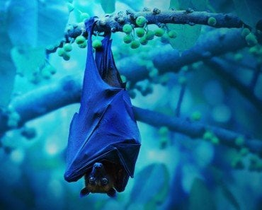 bat sleeping