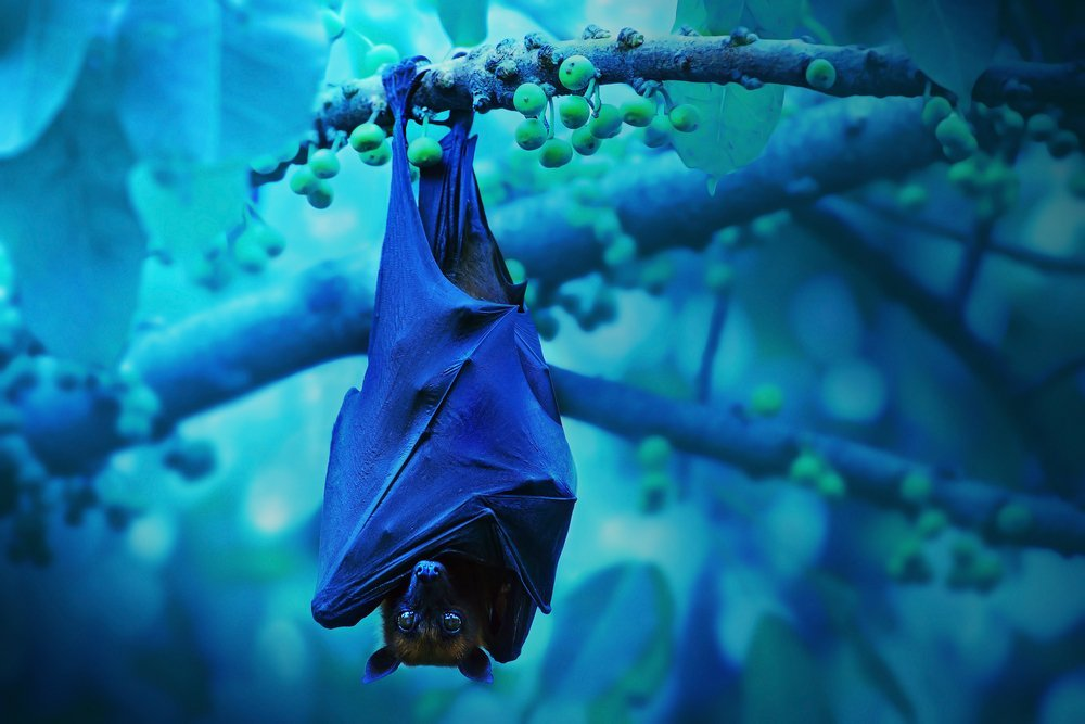 Why Do Bats Hang Upside Down While They Sleep? » Science ABC