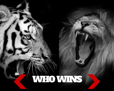 Lion vs Tiger: Which Would Win In A Fight?