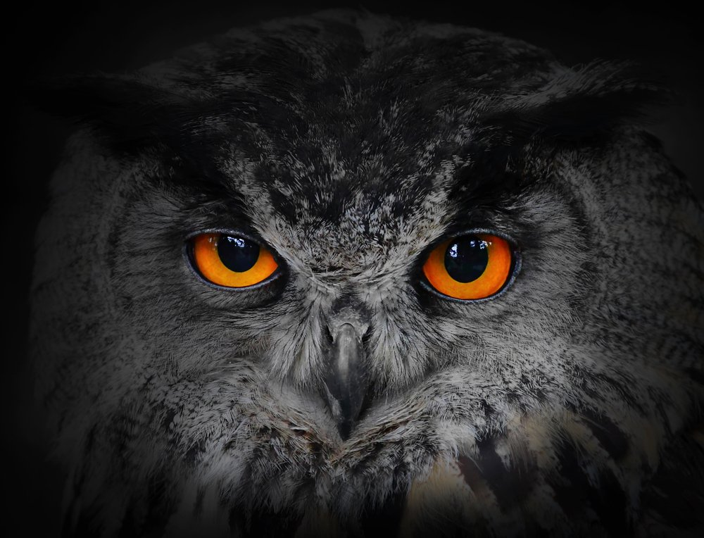 Interesting Owl Facts Night Vision And A 270 Degree Head