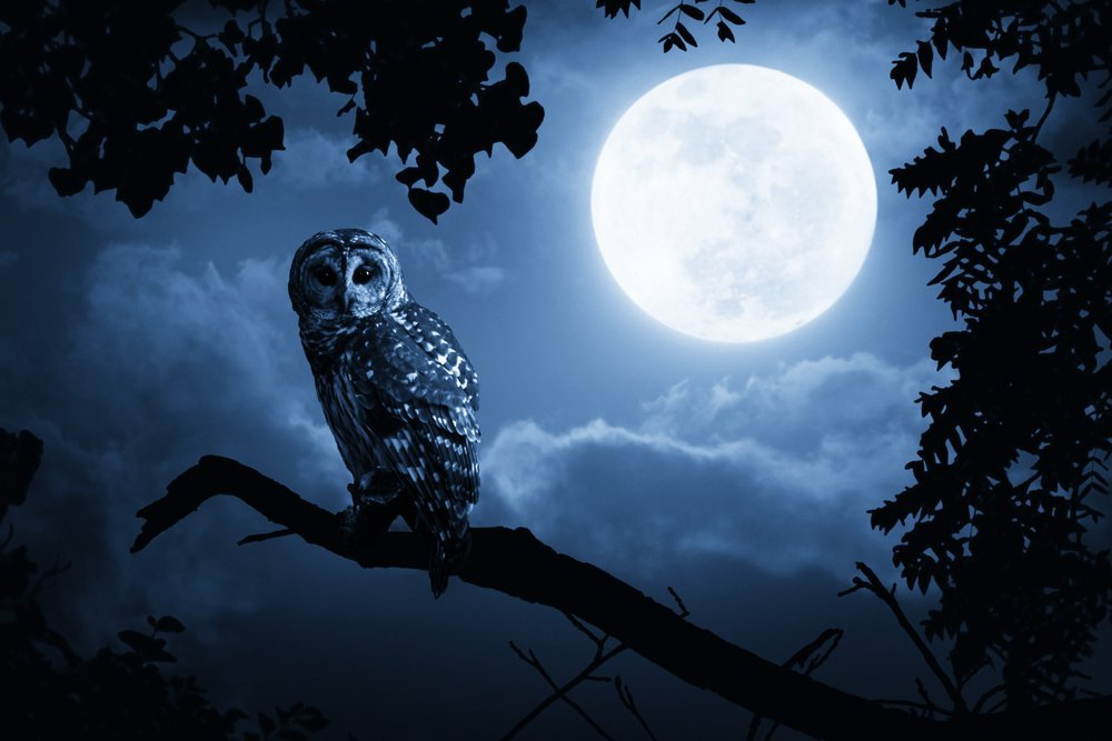 Interesting Owl Facts: Night-Vision And A 270-Degree Head