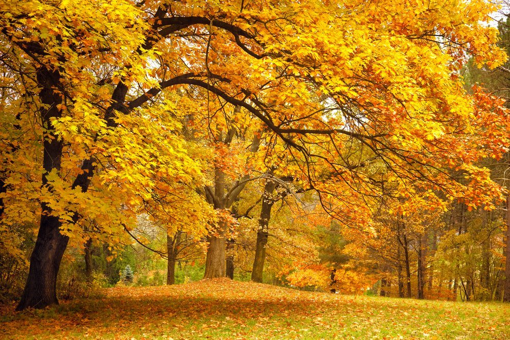 The Science Behind Beautiful Fall Foliage Science Abc