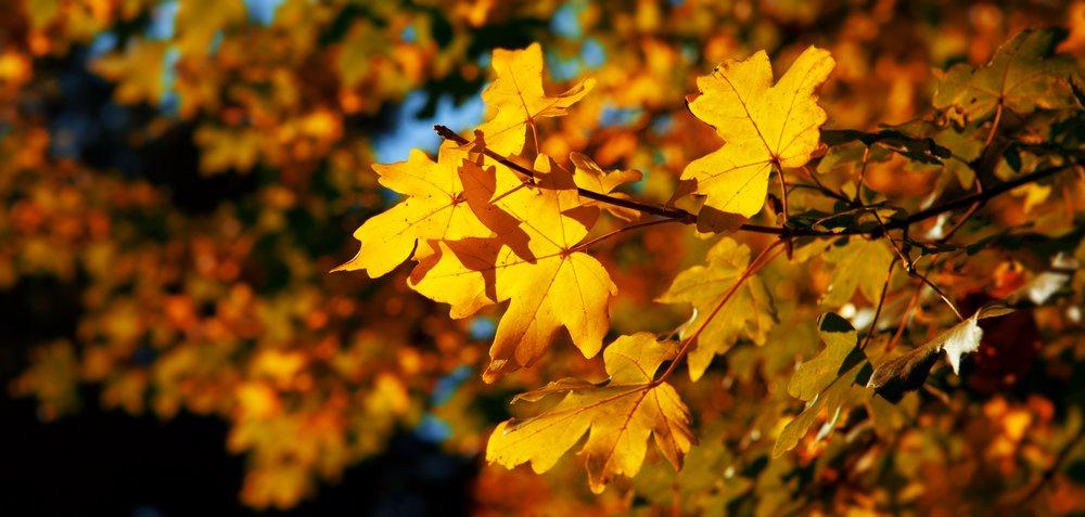 Fall Yellow and Orange
