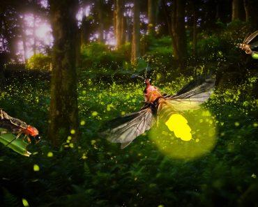 Firefly glowing
