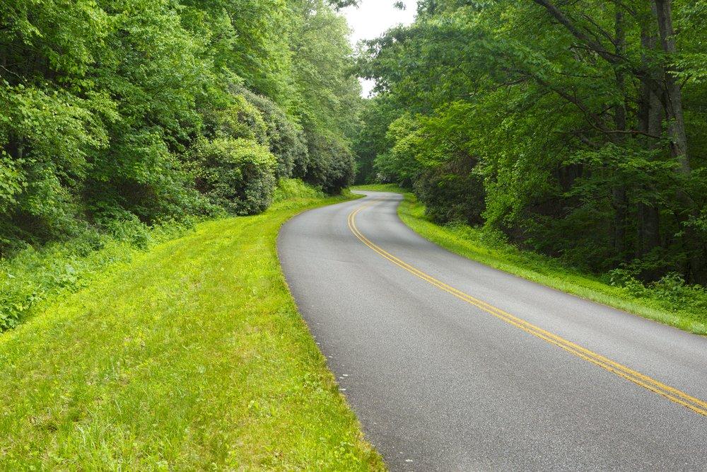 Lush Green Highway