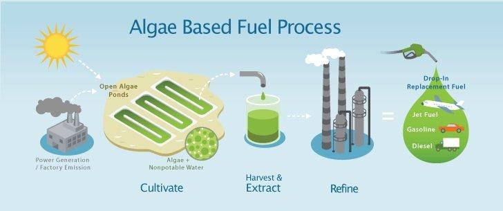 algae-fuel1