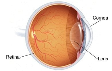 cornea retina lens human eye