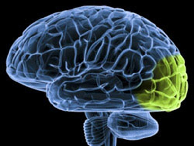 Brain Implant for Some Blind People Shows Benefits of FDA ... |Visual Cortex