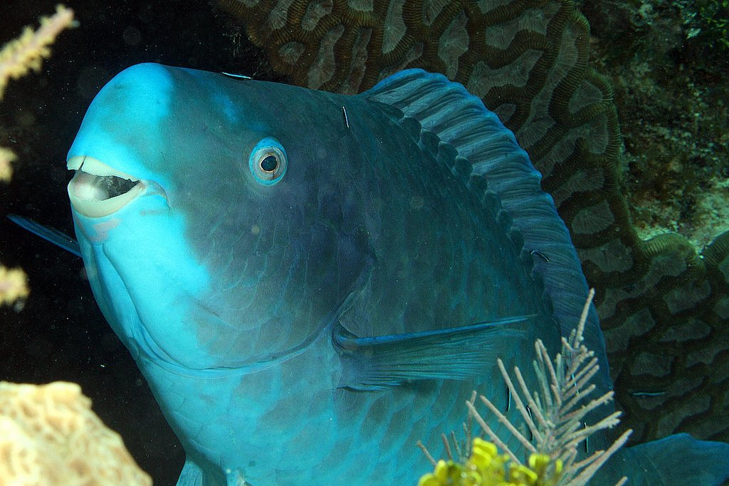 10 Surprisingly Unusual Creatures That You Didn't Know Existed