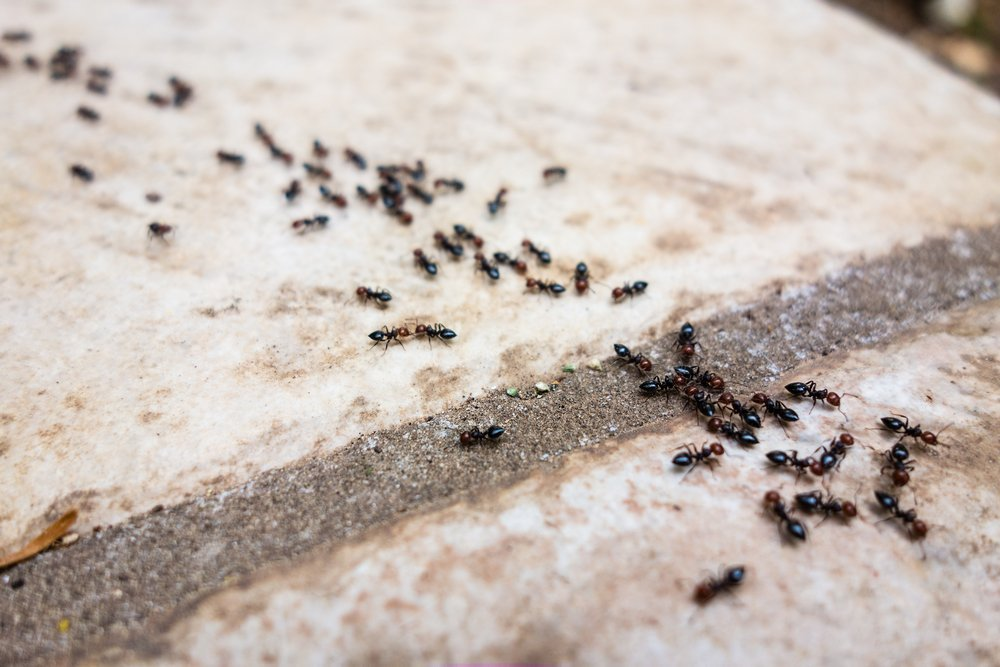 How do ants defend themselves from their enemies for Where do ants come from in the bathroom