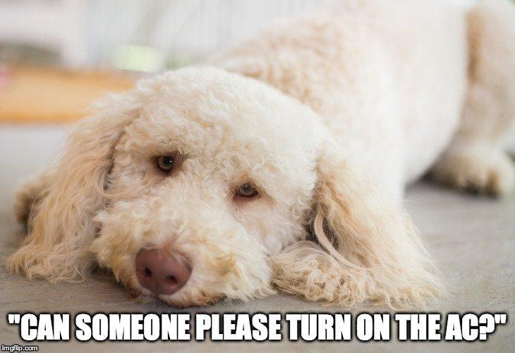 Dog-Meme-2
