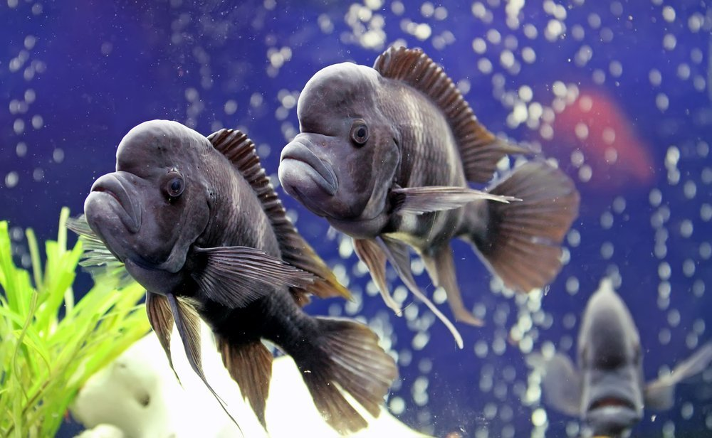 Do fish sleep with their eyes open for How do fishes sleep