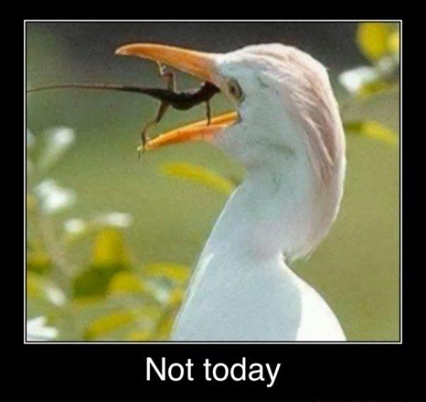 lizard-meme.jpg