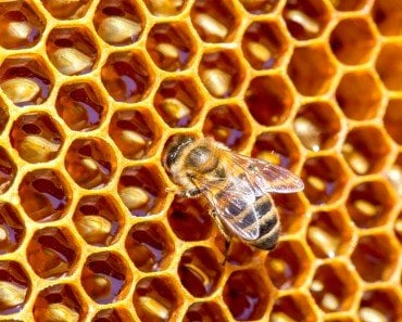 Bees Hexagon
