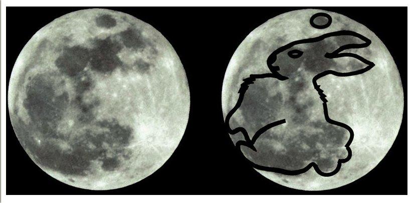 Risultati immagini per a rabbit on the moon