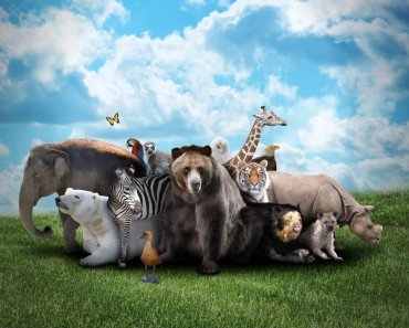 Can Animals Really Predict Natural Disasters?