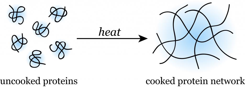 proteincoagulation