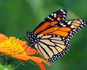 How Do Butterflies Taste And Eat Their Food?