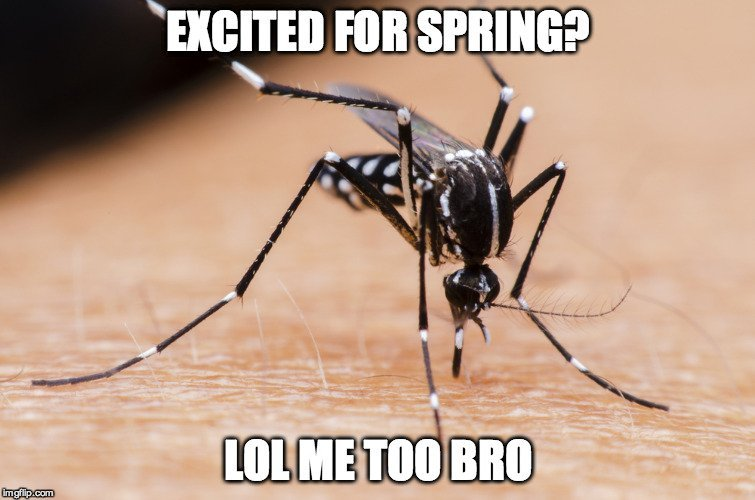 Mosquito Bite Meme how do mosquitoes deal with raindrops? science abc
