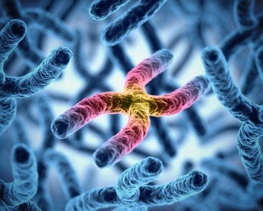 , What Are Homologous Chromosomes?, Science ABC, Science ABC