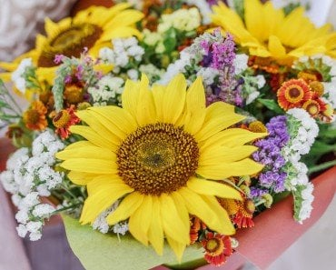 What Makes Flowers So Colorful?