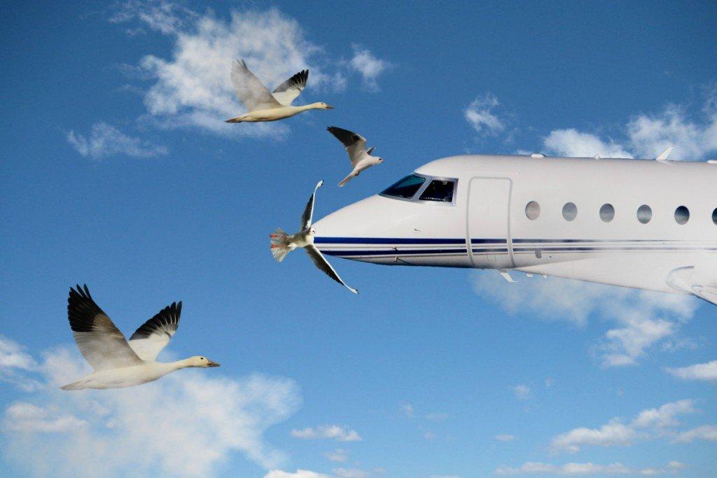 نتيجة بحث الصور عن طائر يصدم بطائرة