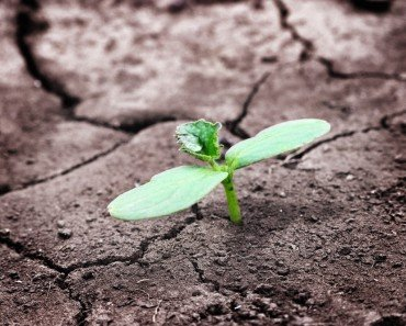 Newborn Sprout
