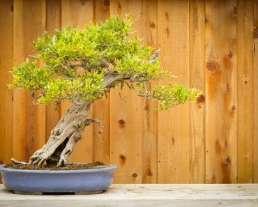 How To Calculate The Age Of A Tree » Science ABC