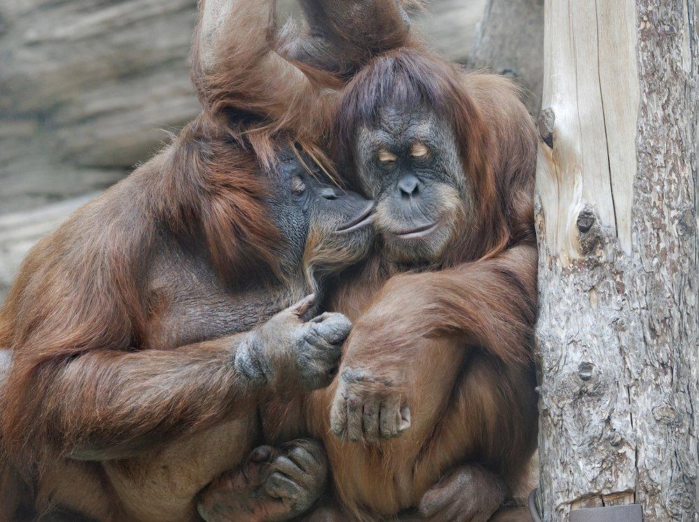 Evolution kissing