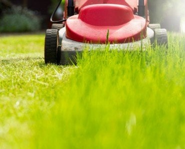"What Causes That ""Fresh-Cut Grass"" Smell?"