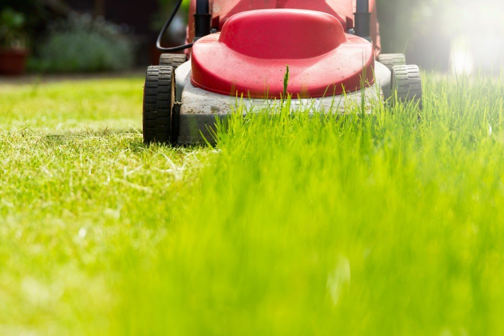 cut grass Here are a few simple grass cutting ideas to save time and effort whilst making your lawn the envy of the street.