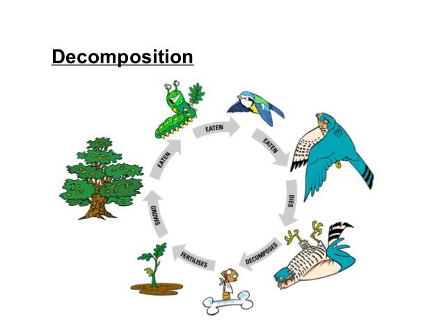 taphonomy and how animals affect decomposition of bones Taphonomy - taphonomy trey kieckhefer what is taphonomy the study of the processes that affect animal and plant remains as the become fossilized post-mordem transport de burial  | powerpoint ppt presentation | free to view.