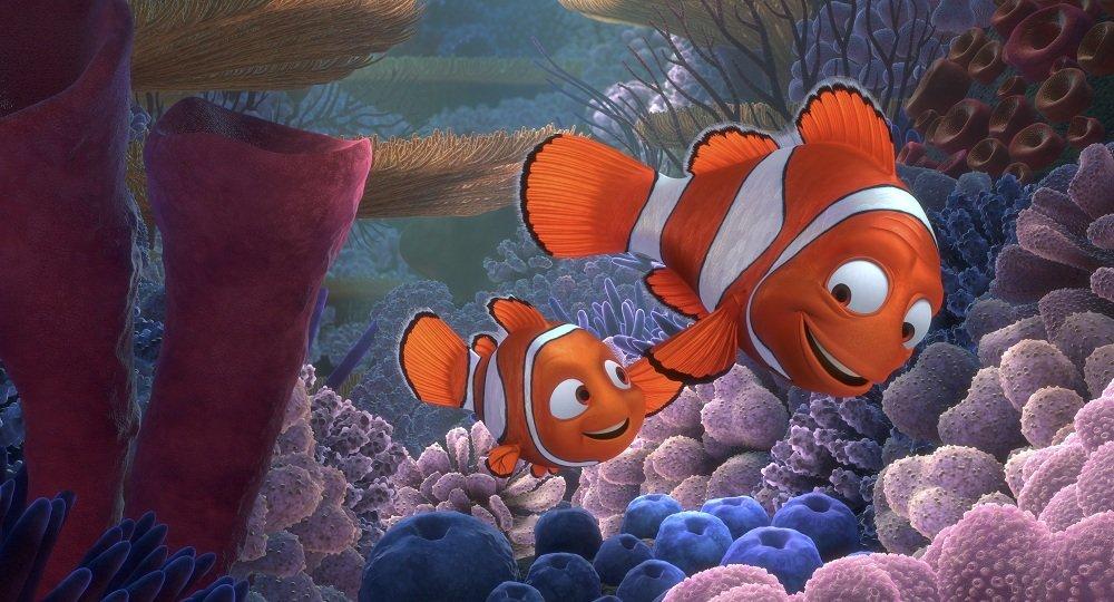 The Weird Yet Fascinating Gender Determination Process In Clownfish ...