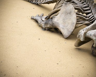 fossilized bones