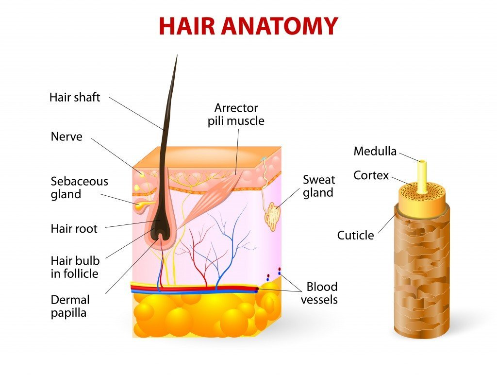 Whats The Science Behind Hair Straightenerscurlers Science Abc