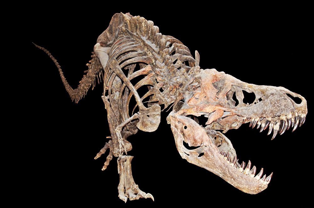 100 free online dating in uk: why carbon 14 is not used for dating dinosaur bones images