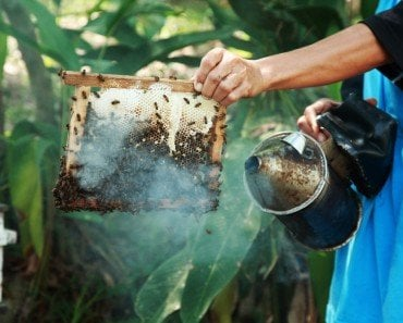 How Does Smoke Affect Honey Bees?