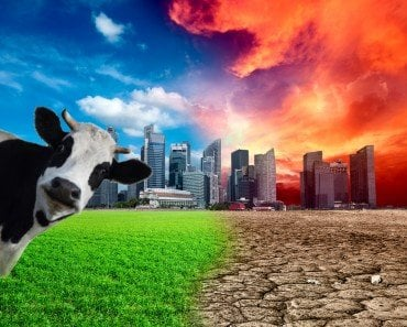 Do Cows Contribute More to Global Warming Than Cars?