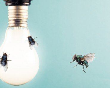 Why Are Bugs Attracted To Light?