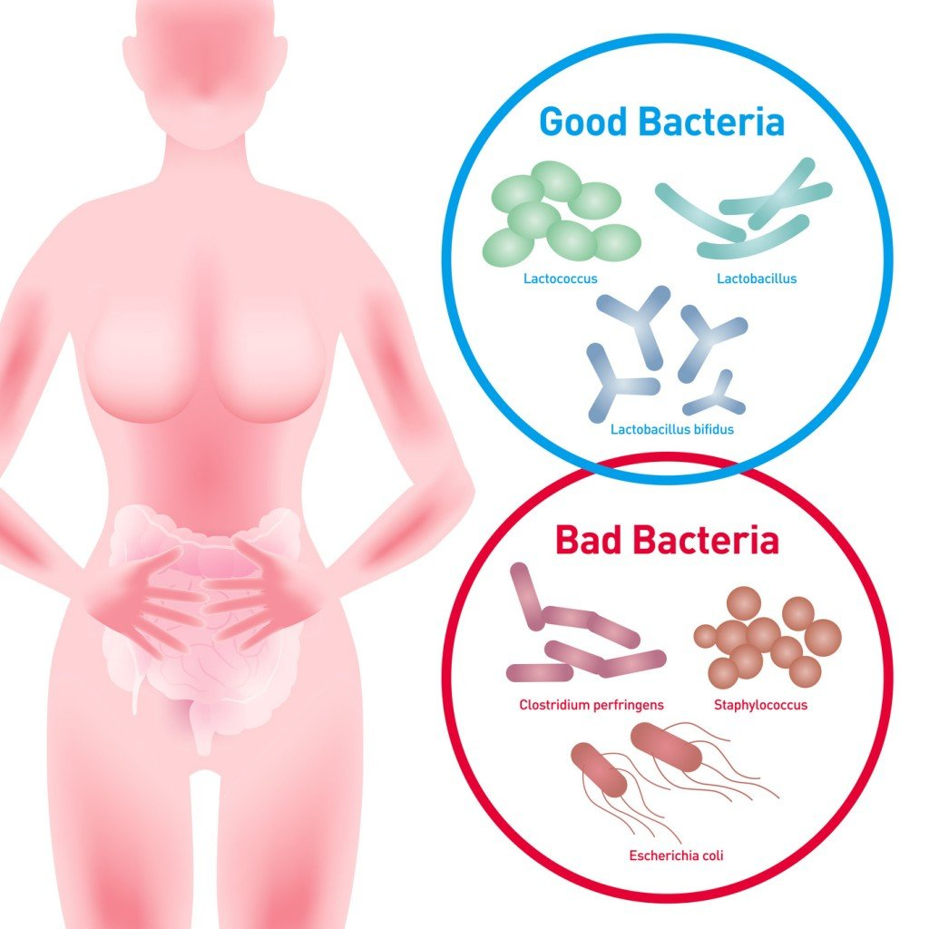 Good vs. Bad Bacteria (Photo Credit: chombosan / Fotolia)