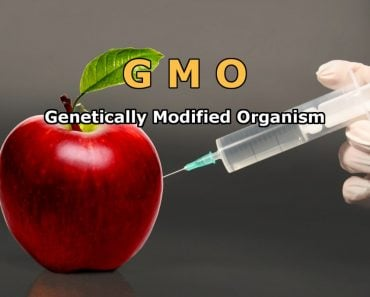 GMO Genetically Modified Organism