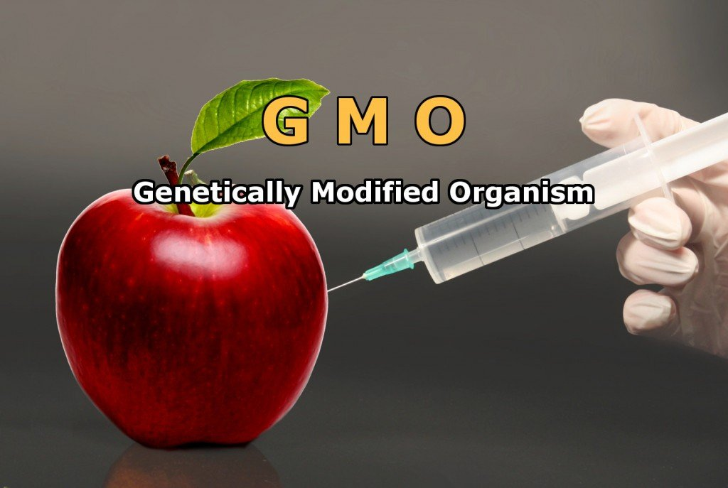 Genetically Modified Foods Essay Thesis