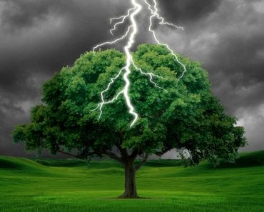 What Happens When a Tree Is Struck By Lightning?