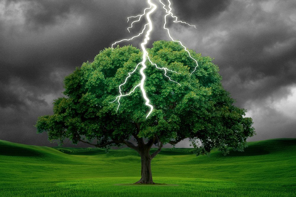 Image result for thunderstorm tree