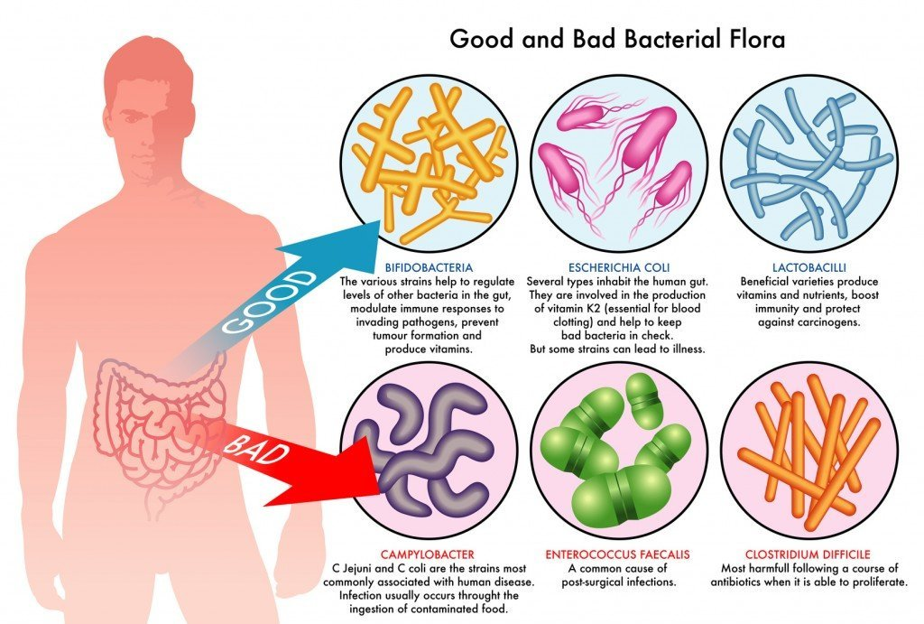 A small fraction of the gut bacteria varieties (Photo Credit: rob3000 / Fotolia)