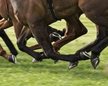 Horse nail
