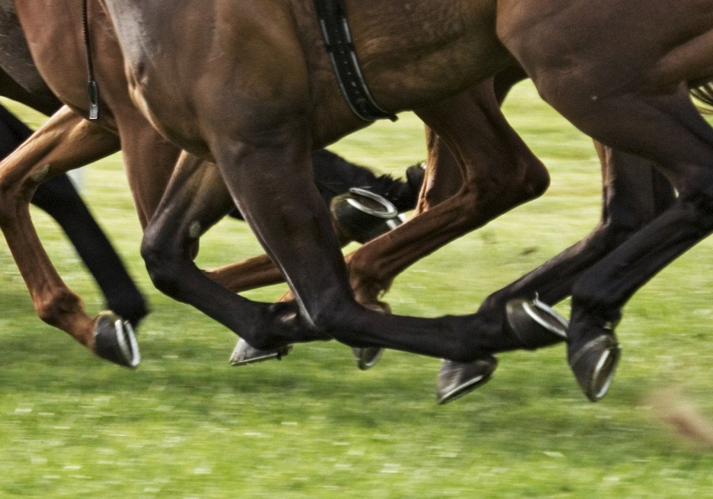 Why Do Horses Wear Shoes? » Science ABC