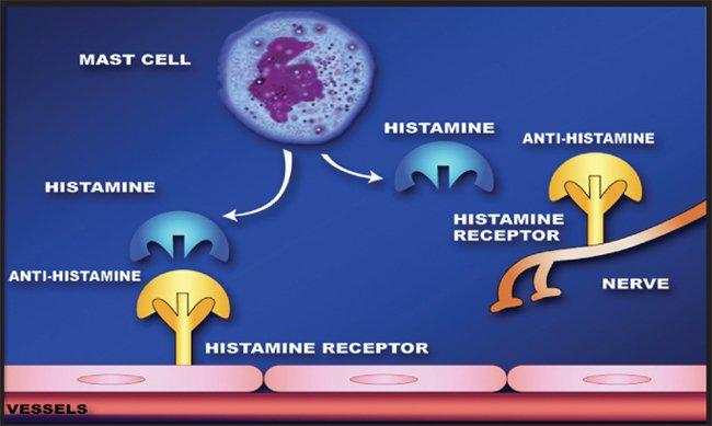 How Do Sleeping Pills Work 187 Science Abc